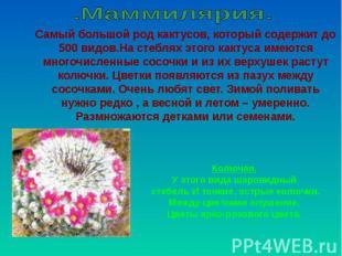 .Маммилярия. Самый большой род кактусов, который содержит до 500 видов.На стебля