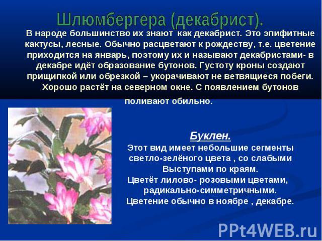 Шлюмбергера (декабрист). В народе большинство их знают как декабрист. Это эпифитные кактусы, лесные. Обычно расцветают к рождеству, т.е. цветение приходится на январь, поэтому их и называют декабристами- в декабре идёт образование бутонов. Густоту к…