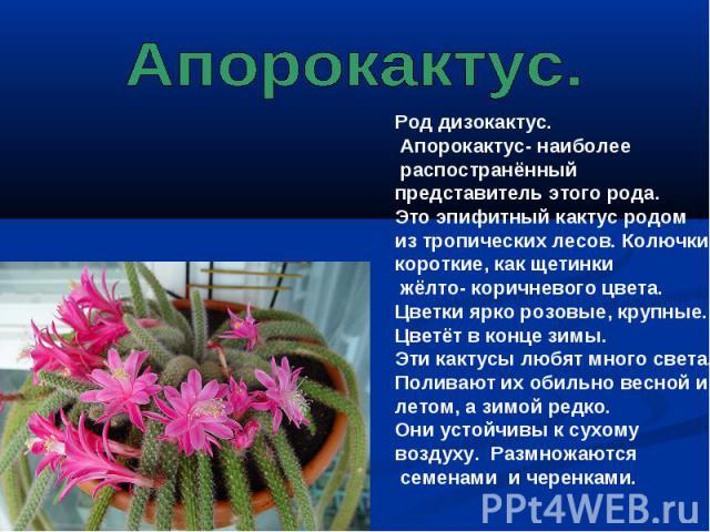 Апорокактус. Род дизокактус. Апорокактус- наиболее распостранённый представитель этого рода. Это эпифитный кактус родом из тропических лесов. Колючки короткие, как щетинки жёлто- коричневого цвета. Цветки ярко розовые, крупные. Цветёт в конце зимы. …