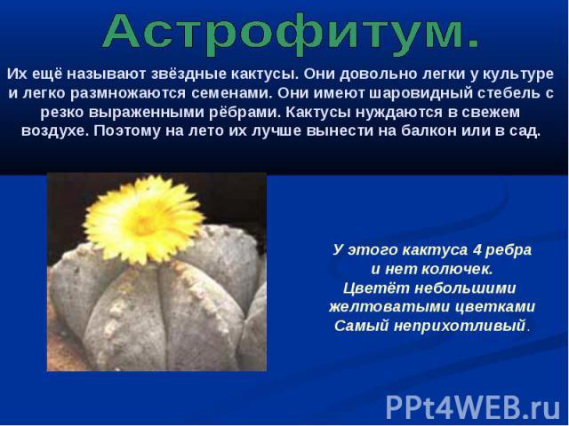 Астрофитум. Их ещё называют звёздные кактусы. Они довольно легки у культуре и легко размножаются семенами. Они имеют шаровидный стебель с резко выраженными рёбрами. Кактусы нуждаются в свежем воздухе. Поэтому на лето их лучше вынести на балкон или в…