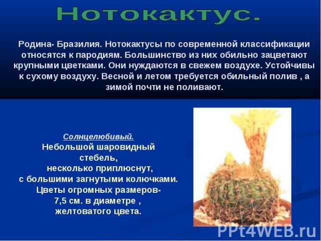 Нотокактус. Родина- Бразилия. Нотокактусы по современной классификации относятся к пародиям. Большинство из них обильно зацветают крупными цветками. Они нуждаются в свежем воздухе. Устойчивы к сухому воздуху. Весной и летом требуется обильный полив …