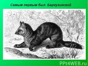 Самым первым был Баргузинский Баргузи нский запове дник— заповедник в Бурятии,