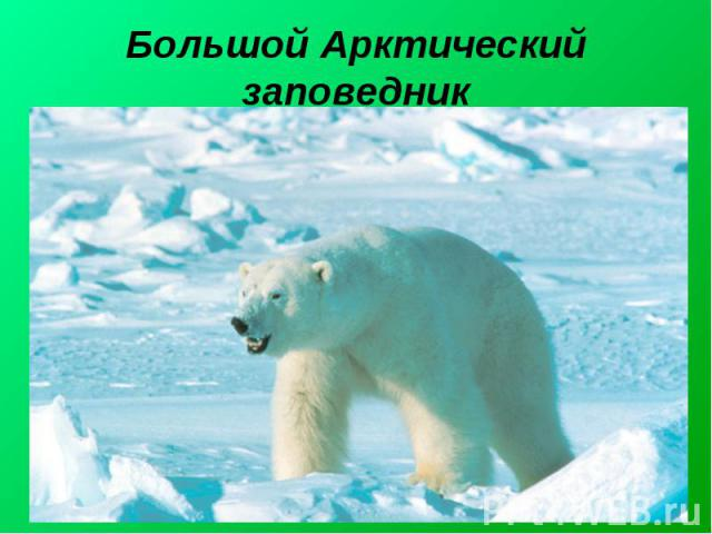 Большой Арктический заповедник Большо й Аркти ческий запове дник— крупнейший заповедник в России и Евразии. Официальное название— Большой Арктический государственный природный заповедник. Создан 11 мая 1993 года. Заповедник находится на территории…