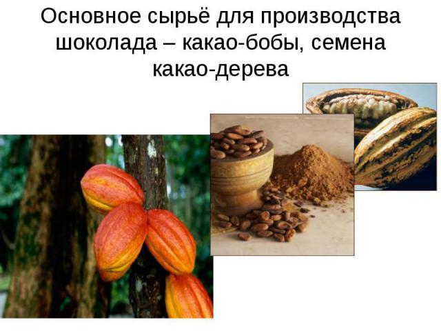 Основное сырьё для производства шоколада – какао-бобы, семена какао-дерева