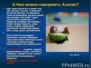 """4.Чем можно накормить Ахатин?Едят практически все. Кушают они при помощи """"язычка"""