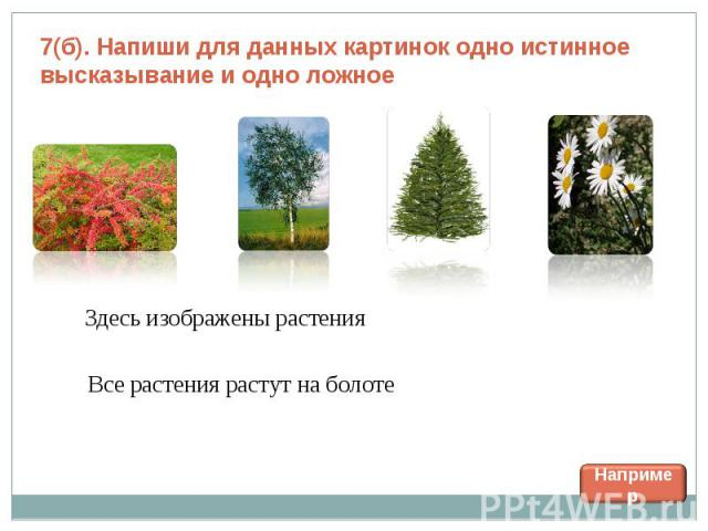 7(б). Напиши для данных картинок одно истинное высказывание и одно ложное Здесь изображены растения Все растения растут на болоте