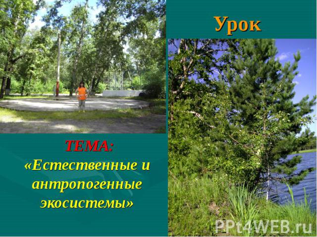 Урок ТЕМА: «Естественные и антропогенные экосистемы»