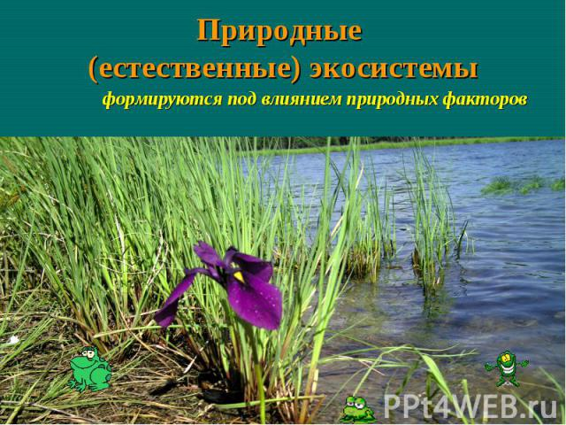 Природные (естественные) экосистемы формируются под влиянием природных факторов