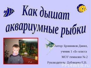 Как дышат аквариумные рыбки Автор: Бронников Данил, ученик 1 «Б» класса МОУ гимн