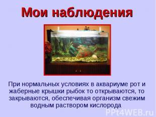 Мои наблюдения При нормальных условиях в аквариуме рот и жаберные крышки рыбок т
