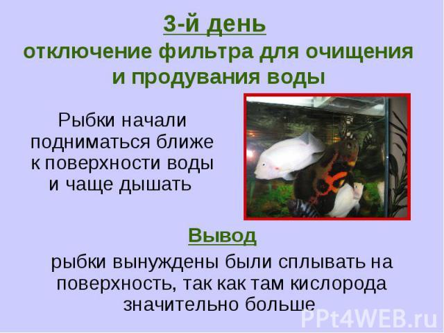 3-й день отключение фильтра для очищения и продувания воды Рыбки начали подниматься ближе к поверхности воды и чаще дышать Вывод рыбки вынуждены были сплывать на поверхность, так как там кислорода значительно больше