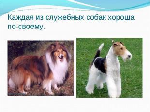 Каждая из служебных собак хороша по-своему.