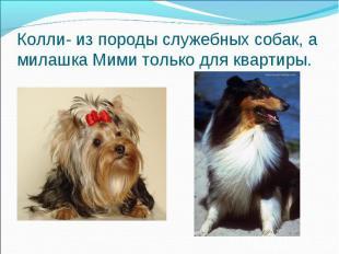 Колли- из породы служебных собак, а милашка Мими только для квартиры.