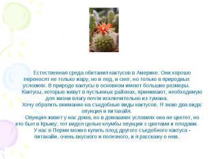 Естественная среда обитания кактусов в Америке. Они хорошо переносят не только ж