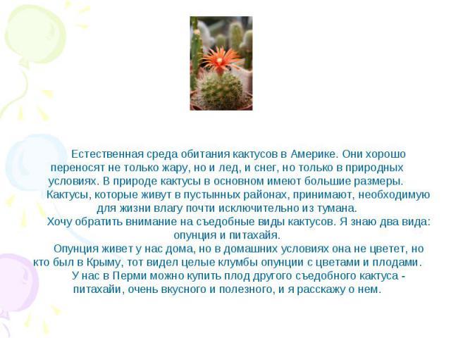 Естественная среда обитания кактусов в Америке. Они хорошо переносят не только жару, но и лед, и снег, но только в природных условиях. В природе кактусы в основном имеют большие размеры. Кактусы, которые живут в пустынных районах, принимают, необход…