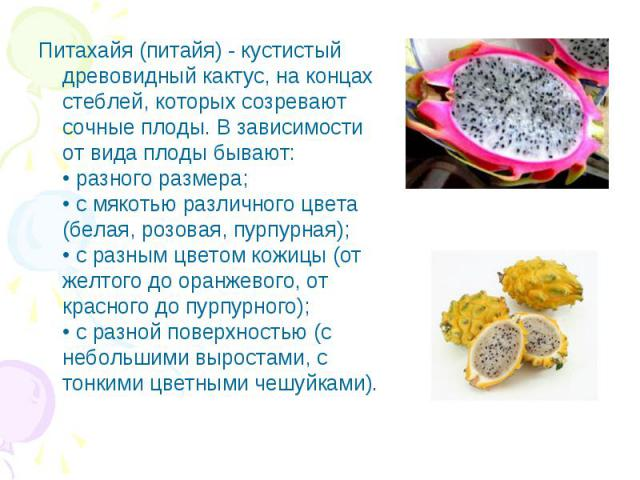 Питахайя (питайя) - кустистый древовидный кактус, на концах стеблей, которых созревают сочные плоды. В зависимости от вида плоды бывают: • разного размера; • с мякотью различного цвета (белая, розовая, пурпурная); • с разным цветом кожицы (от желтог…