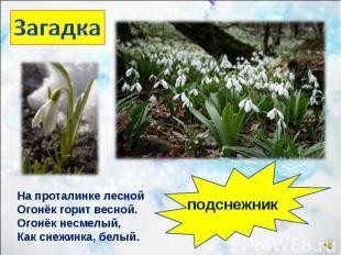 На проталинке лесной Огонёк горит весной. Огонёк несмелый, Как снежинка, белый.
