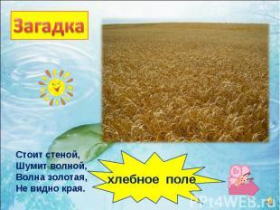 Стоит стеной, Шумит волной, Волна золотая, Не видно края. хлебное поле