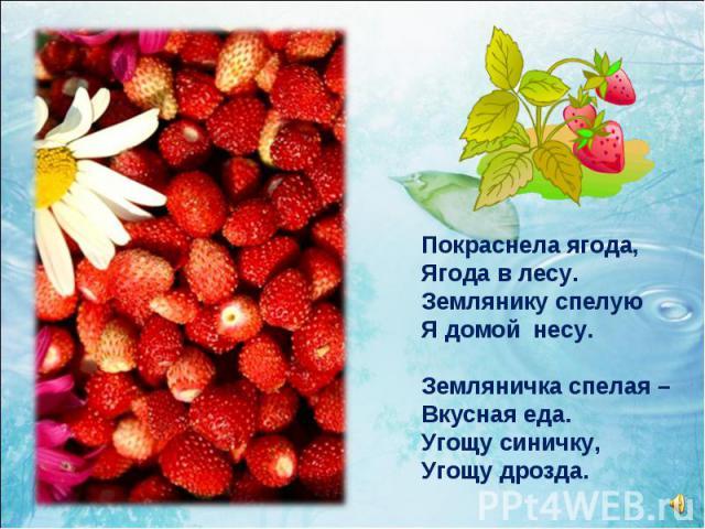 Покраснела ягода, Ягода в лесу. Землянику спелую Я домой несу. Земляничка спелая – Вкусная еда. Угощу синичку, Угощу дрозда.