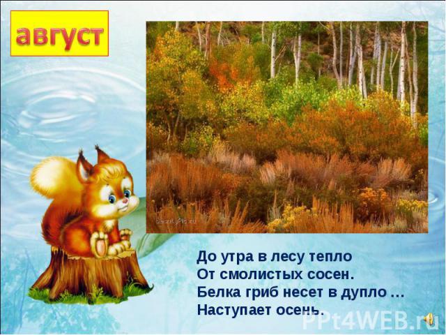 До утра в лесу тепло От смолистых сосен. Белка гриб несет в дупло … Наступает осень.
