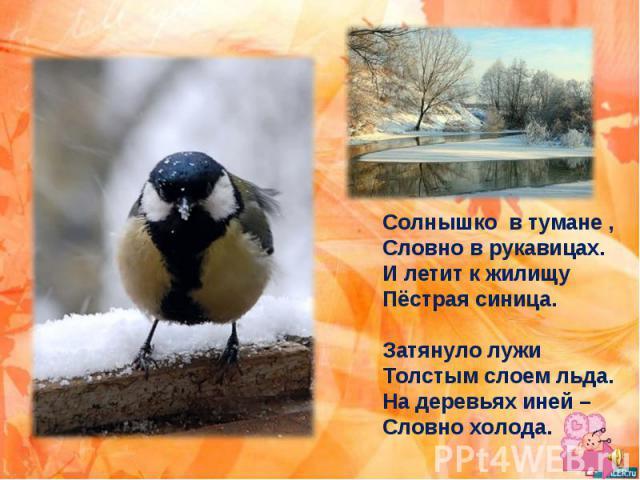 Солнышко в тумане , Словно в рукавицах. И летит к жилищу Пёстрая синица. Затянуло лужи Толстым слоем льда. На деревьях иней – Словно холода.