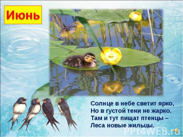 Солнце в небе светит ярко, Но в густой тени не жарко. Там и тут пищат птенцы – Леса новые жильцы.