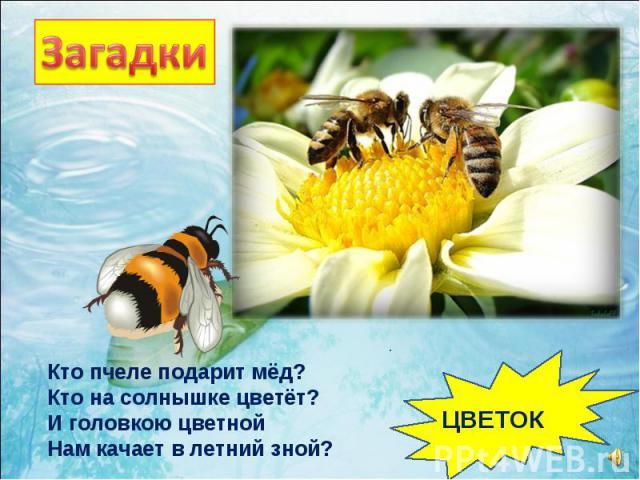 Кто пчеле подарит мёд? Кто на солнышке цветёт? И головкою цветной Нам качает в летний зной? ЦВЕТОК