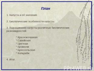 План 1. Капуста и её значения. 2. Биологические особенности капусты. 3. Выращива