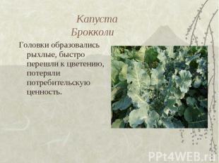 Капуста Брокколи Головки образовались рыхлые, быстро перешли к цветению, потерял