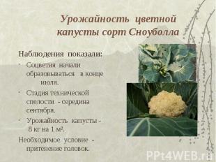 Урожайность цветной капусты сорт Сноуболла Наблюдения показали: Соцветия начали