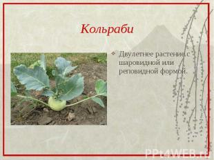 КольрабиДвулетнее растение с шаровидной или реповидной формой.