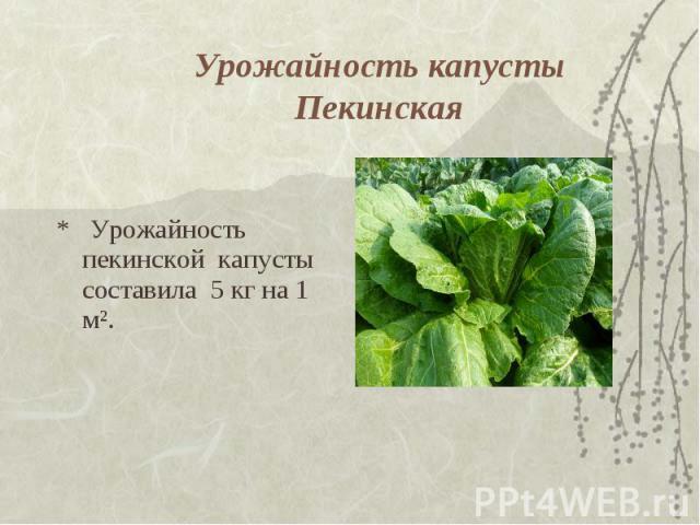Урожайность капусты Пекинская * Урожайность пекинской капусты составила 5 кг на 1 м².