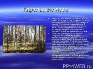 Карельские леса. Карелия - это не только озёра и реки, но и леса, сосновые и, ре