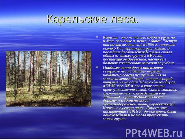 Карельские леса. Карелия - это не только озёра и реки, но и леса, сосновые и, реже, еловые. Растут они почти везде и ещё в 1996 г. занимали около 54% территории республики. В последние десятилетия Карелия стала одним из самых крупных в России постав…