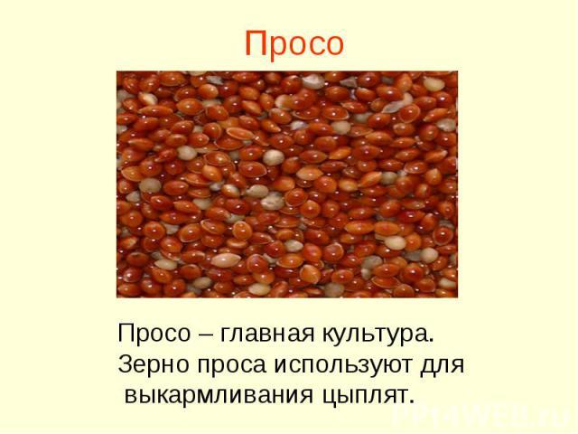 Просо Просо – главная культура. Зерно проса используют для выкармливания цыплят.