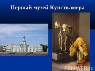 Первый музей Кунсткамера