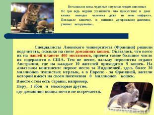 Все кошки и коты, чудесные и нужные людям животные. Не зря ведь медики установил