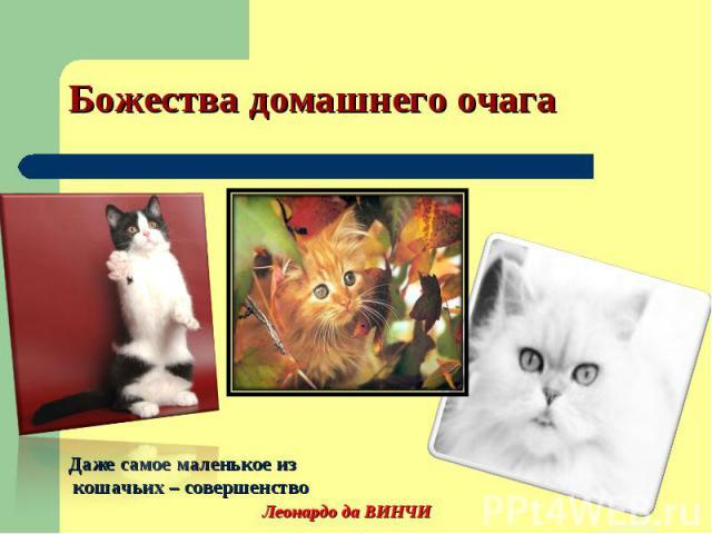 Божества домашнего очага Даже самое маленькое из кошачьих – совершенство Леонардо да ВИНЧИ