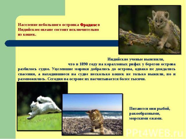 Население небольшого островка Фраджос в Индийском океане состоит исключительно из кошек. Индийские ученые выяснили, что в 1890 году на коралловых рифах у берегов острова разбилось судно. Уцелевшие моряки добрались до острова, однако не дождались спа…