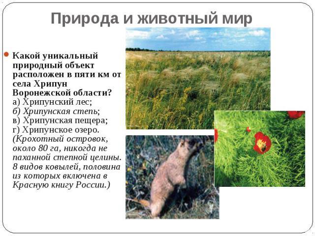 Природа и животный мир Какой уникальный природный объект расположен в пяти км от села Хрипун Воронежской области? а) Хрипунский лес; б) Хрипунская степь; в) Хрипунская пещера; г) Хрипунское озеро. (Крохотный островок, около 80 га, никогда не паханно…