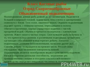 Класс Костные рыбы Отряд Скорпенообразные Обыкновенный подкаменщик Малоподвижная