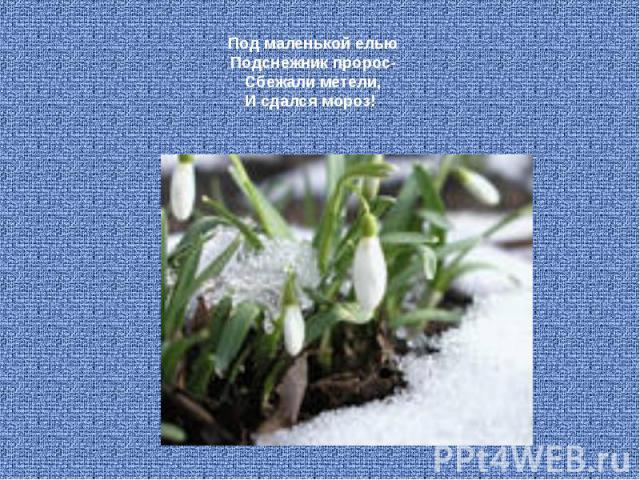 Под маленькой елью Подснежник пророс- Сбежали метели, И сдался мороз!