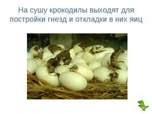 На сушу крокодилы выходят для постройки гнезд и откладки в них яиц