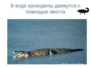 В воде крокодилы движутся с помощью хвоста