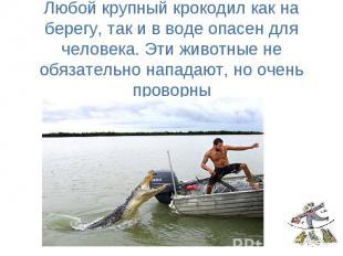 Любой крупный крокодил как на берегу, так и в воде опасен для человека. Эти живо
