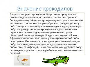 Значение крокодиловВ некоторых реках крокодилы, безусловно, представляют опаснос