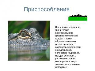 Приспособления Нос и глаза крокодила значительно приподняты над уровнем его плос