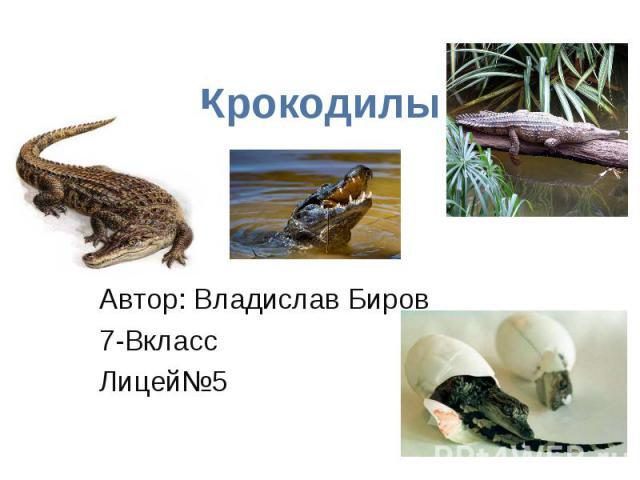 Крокодилы Автор: Владислав Биров 7-Вкласс Лицей№5