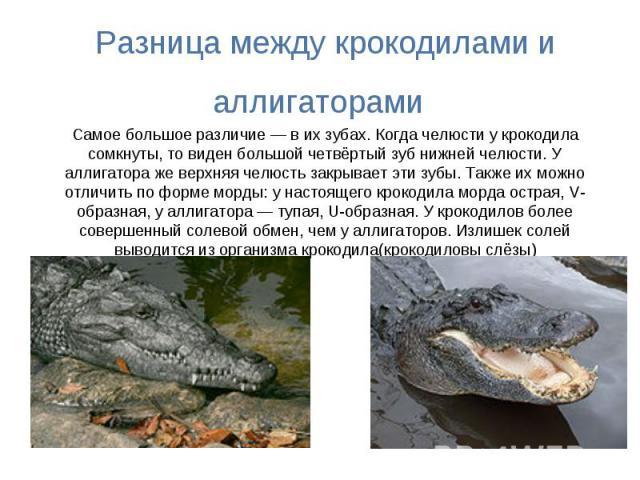 Разница между крокодилами и аллигаторами Самое большое различие — в их зубах. Когда челюсти у крокодила сомкнуты, то виден большой четвёртый зуб нижней челюсти. У аллигатора же верхняя челюсть закрывает эти зубы. Также их можно отличить по форме мор…