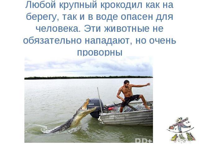 Любой крупный крокодил как на берегу, так и в воде опасен для человека. Эти животные не обязательно нападают, но очень проворны
